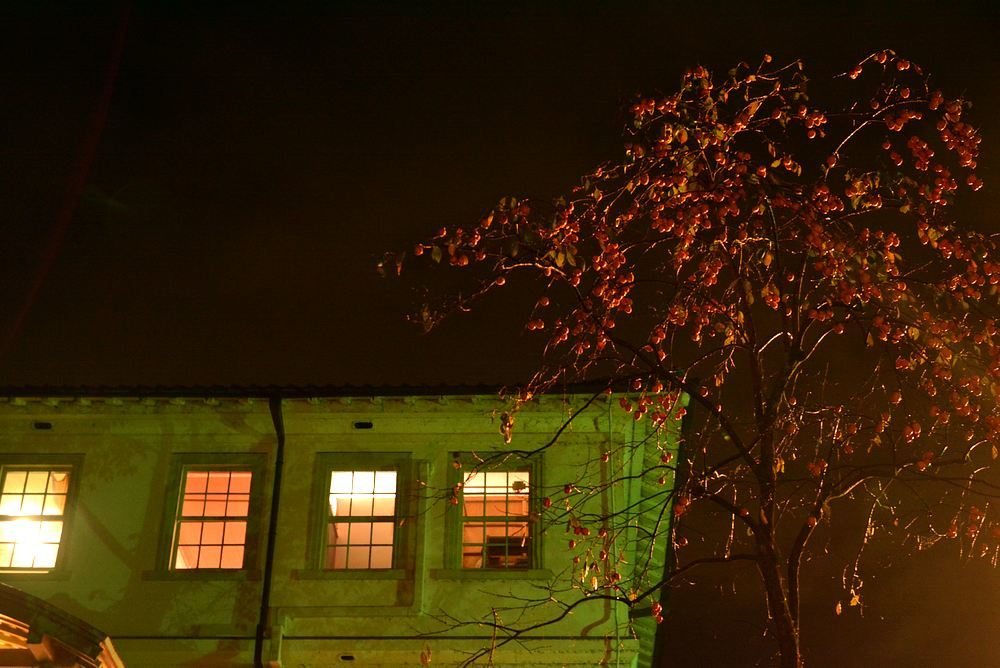 歩兵第六聯隊隊舎脇の柿の木 その1_e0373930_23101962.jpg