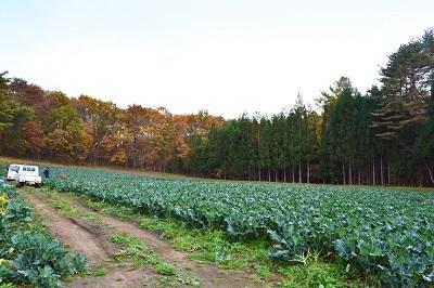 ブロッコリー収穫なのだ~!_c0259934_16371648.jpg