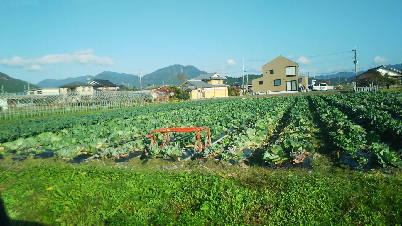 丹波の契約農園  キャベツ畑_d0393039_08184441.jpg