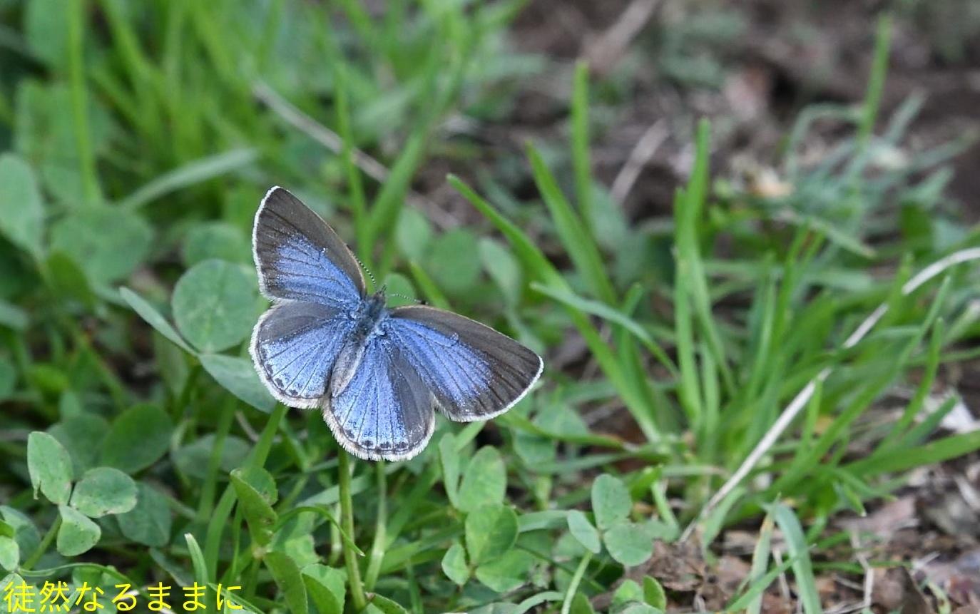 防衛大学校内の蝶たち_d0285540_20211920.jpg