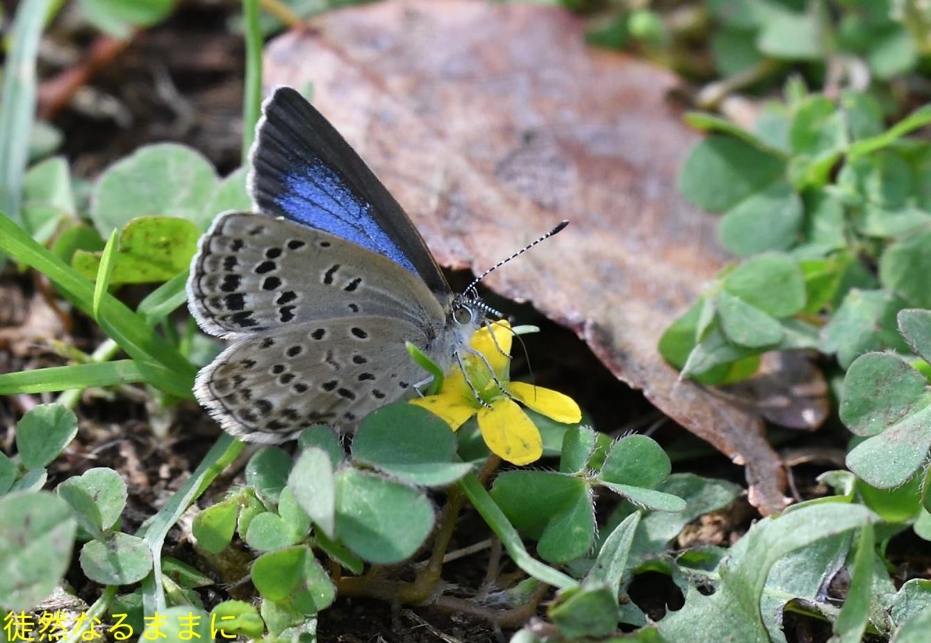 防衛大学校内の蝶たち_d0285540_20215603.jpg