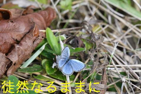 防衛大学校内の蝶たち_d0285540_20220524.jpg