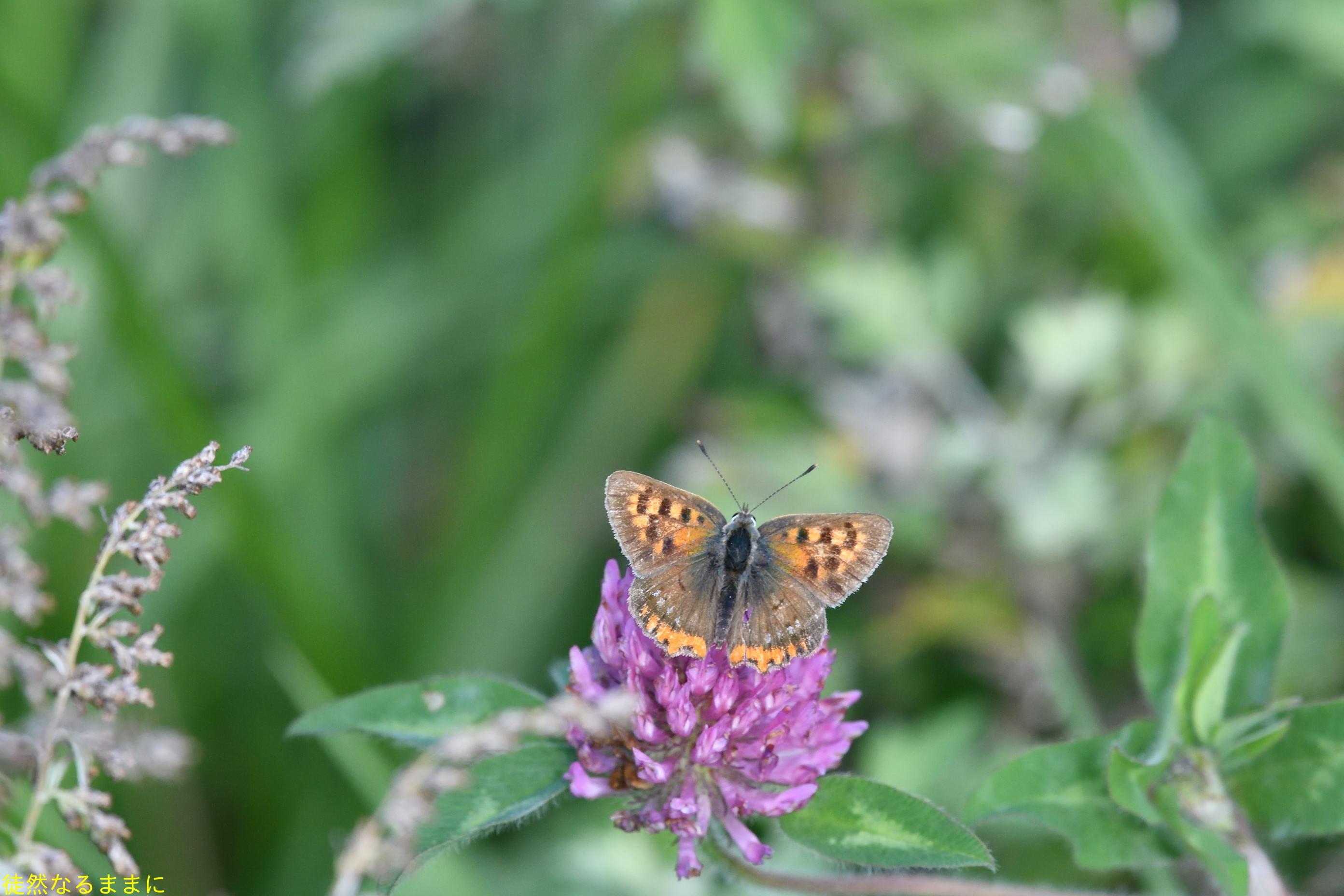防衛大学校内の蝶たち_d0285540_20221916.jpg