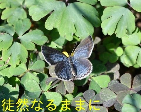 防衛大学校内の蝶たち_d0285540_20222909.jpg