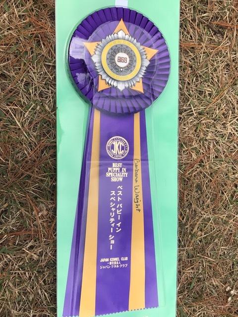 11.11 JKC 部会展_a0139367_20385472.jpg
