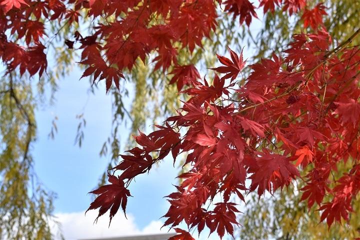 晩秋の中島公園_f0362073_15540023.jpg