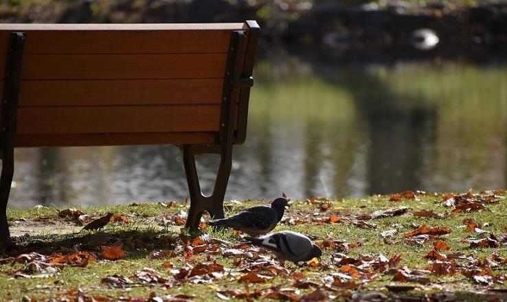晩秋の中島公園_f0362073_15551681.jpg