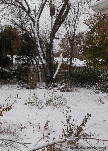 寒いと思ったら雪_b0253205_04522549.jpg