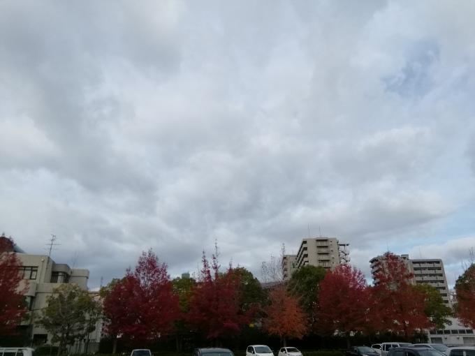 昨日の雨は止み、雲の間から日が射します_e0094315_08285022.jpg