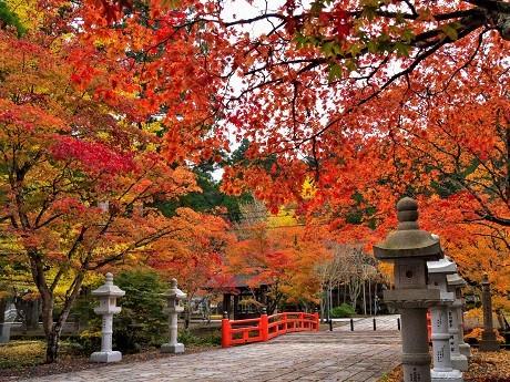 高野山~奥の院~_c0057946_20172906.jpg