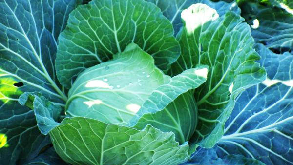 野菜を貰いに_b0404748_19595219.jpg