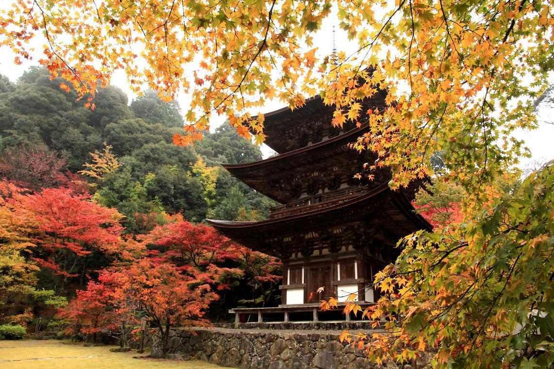 彦根城博物館見学  ~2012年湖東のお寺~ _a0107574_18361186.jpg