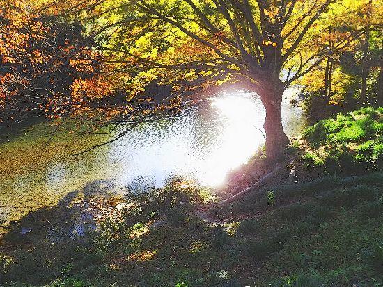 秋の光、季節のサプライズ_c0141013_19314297.jpg
