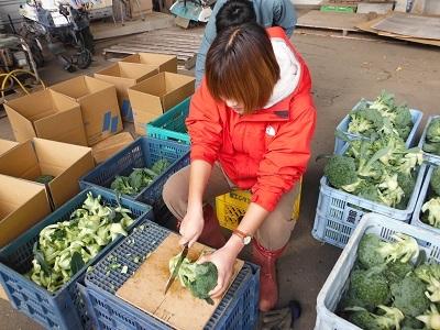 ブロッコリー収穫なのだ~!_c0259934_09165883.jpg