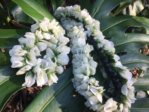 スナップえんどうの花のレイ_b0181141_23012642.jpg