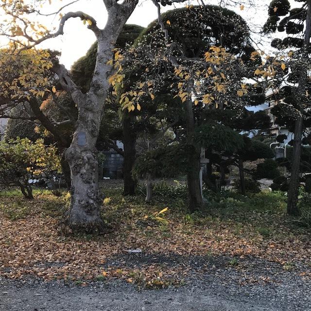 信州は寒かった!_e0226943_22531866.jpg