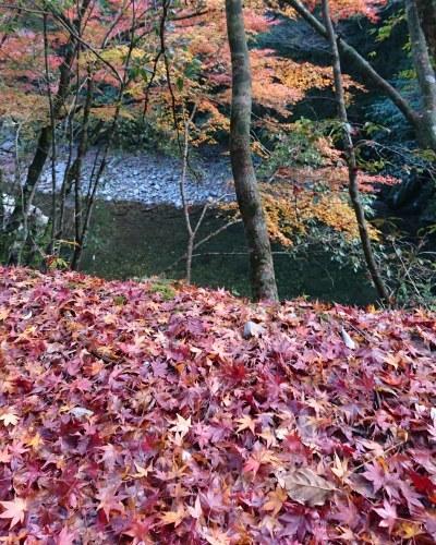 秋を満喫_c0172049_13245782.jpg
