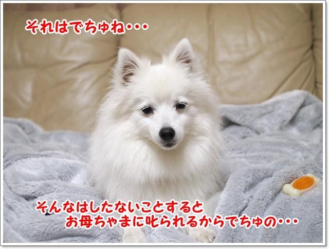 d0013149_00134393.jpg