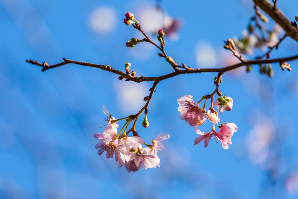 初冬の青空に咲く_a0261169_19584169.jpg