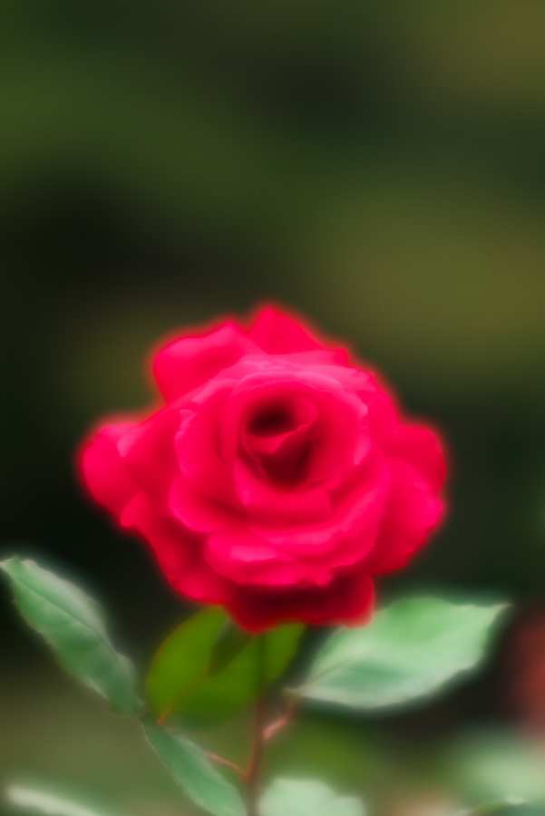 a0263109_19591535.jpg