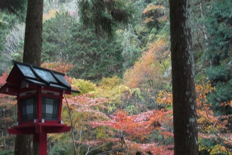貴船神社 紅葉盛りに_e0048413_15535281.jpg