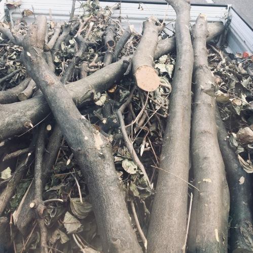 緑の再生工場に  枝を持ち込む_e0356016_10021216.jpeg