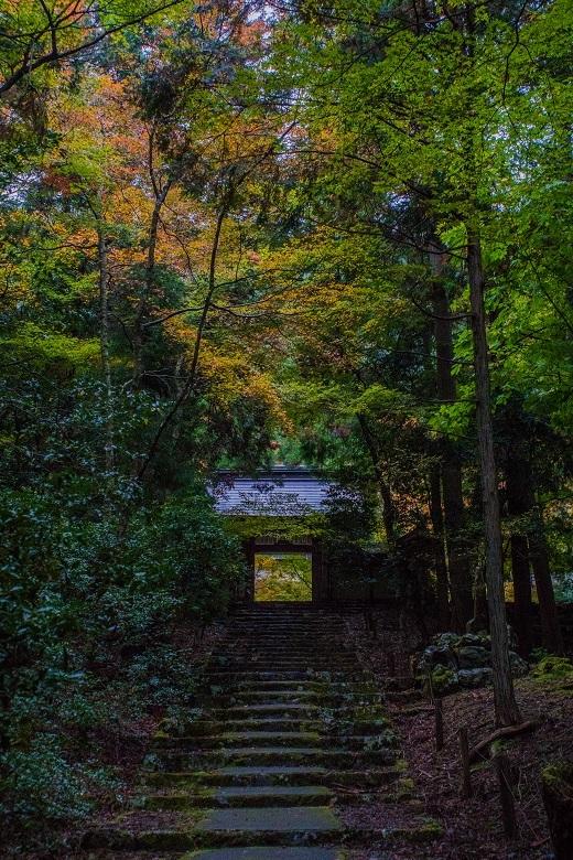 2018京都紅葉~常照皇寺_e0363038_19215248.jpg