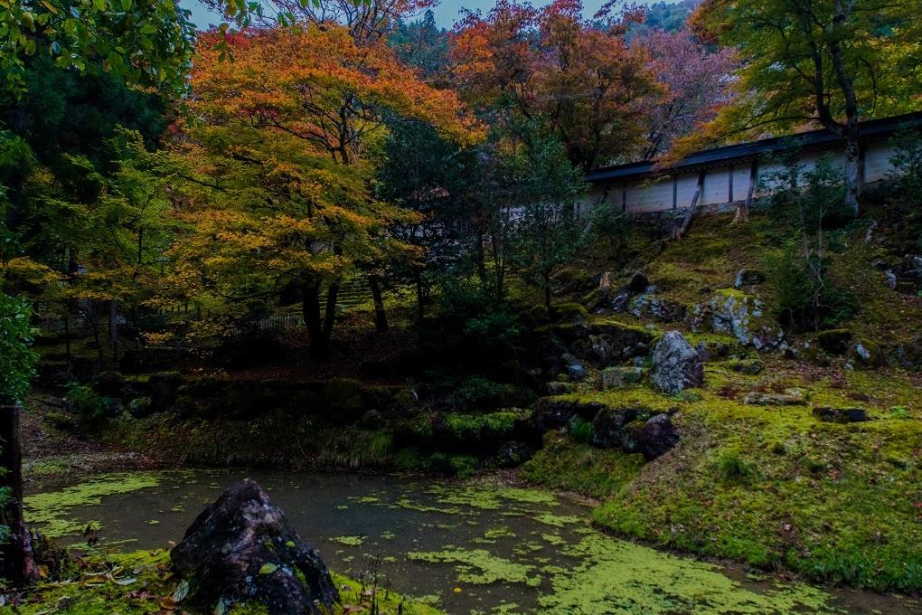 2018京都紅葉~常照皇寺_e0363038_19220393.jpg