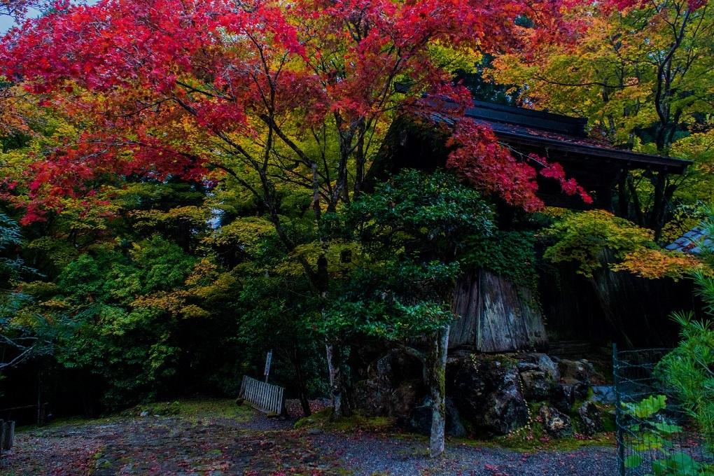 2018京都紅葉~常照皇寺_e0363038_19221813.jpg