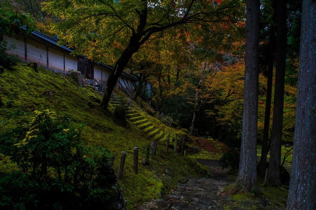 2018京都紅葉~常照皇寺_e0363038_19231357.jpg