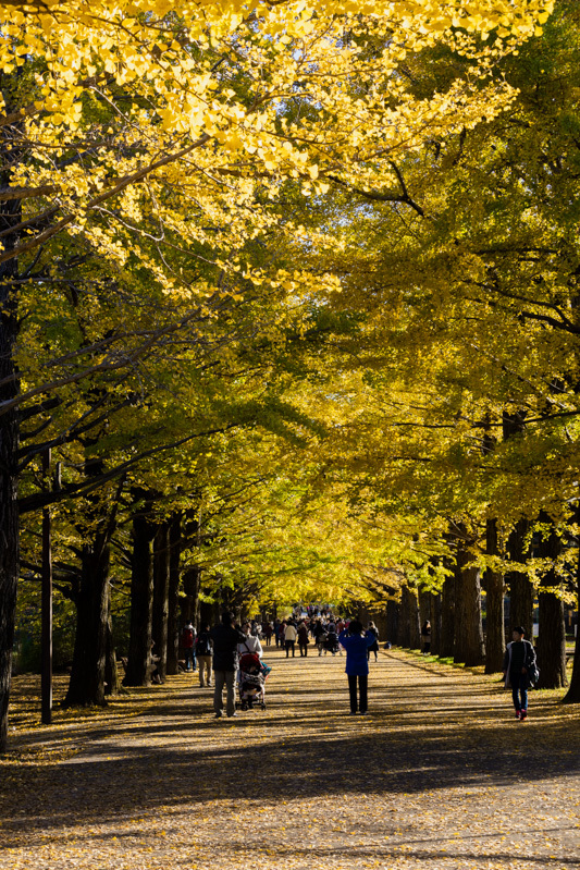 銀杏並木は黄金色に輝いていた_a0261169_22322988.jpg