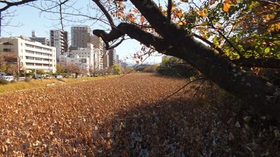 福岡城址の秋 Ⅱ_b0214473_19404514.jpg