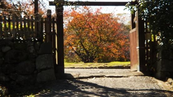福岡城址の秋 Ⅰ_b0214473_1971549.jpg