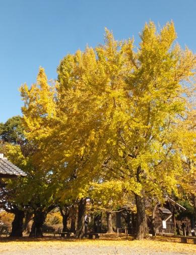福岡城址の秋 Ⅰ_b0214473_1973963.jpg