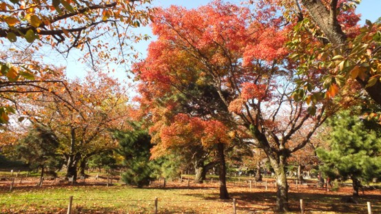 福岡城址の秋 Ⅰ_b0214473_1981877.jpg