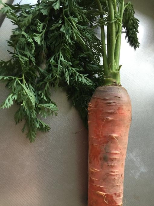 野菜って美味しい!_a0125981_18221747.jpg