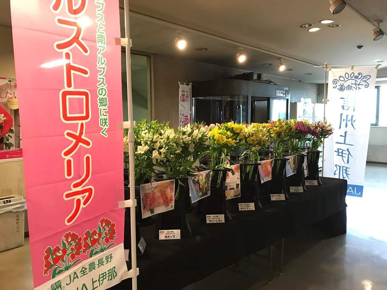 アルストロメリア品種展示 in 西日本花きさま_d0062298_20465142.jpg