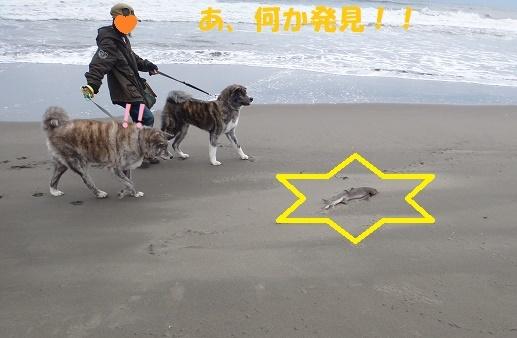 f0121712_06090273.jpg