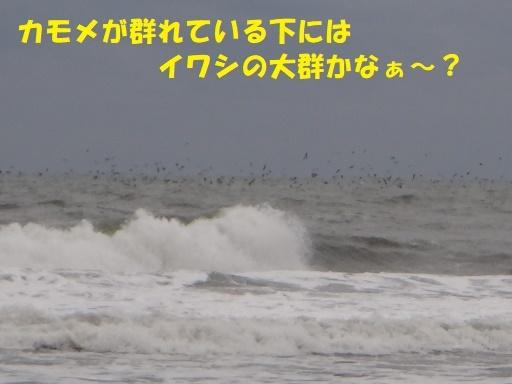 f0121712_06122021.jpg