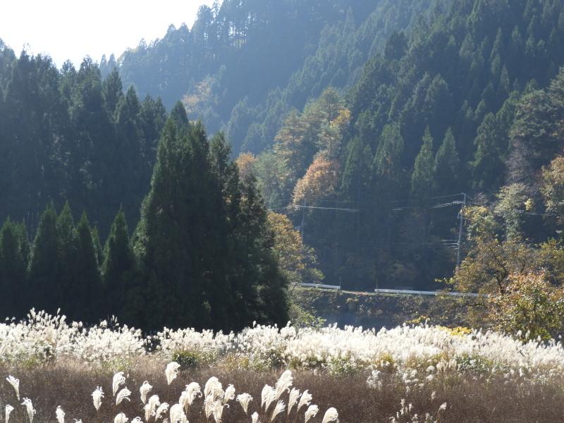 北山 秋の盛り_e0048413_20274940.jpg