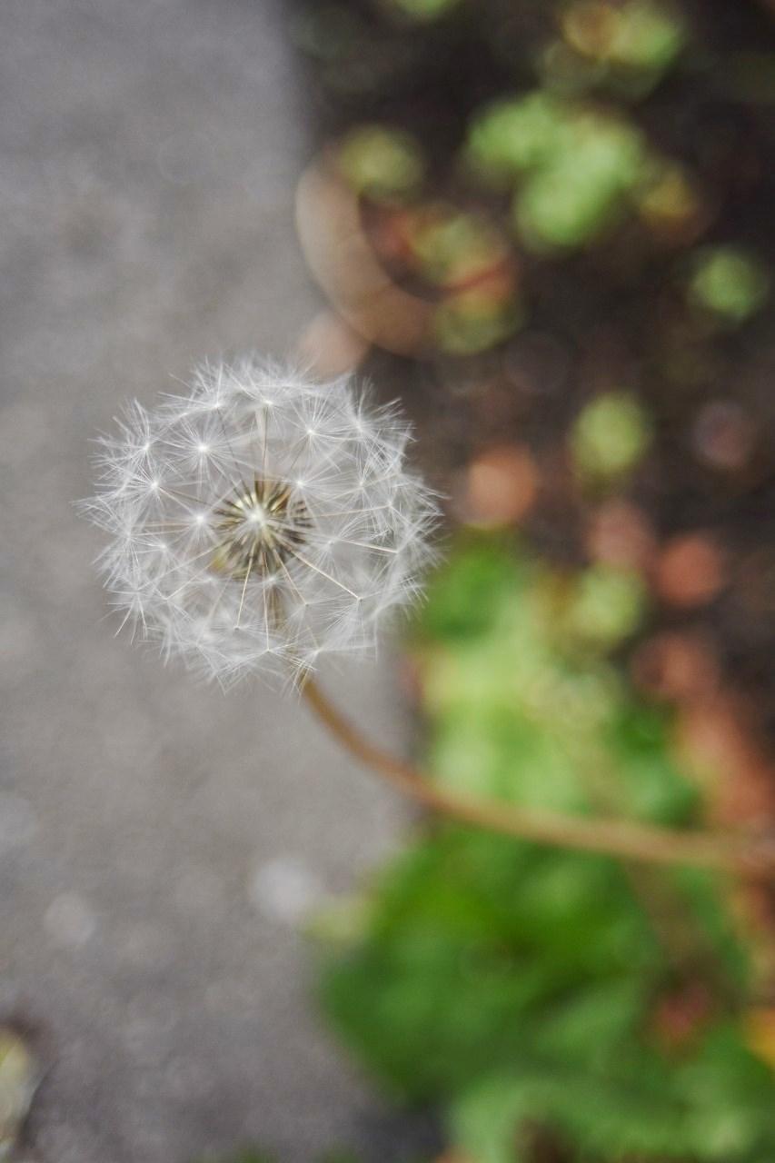 小さい秋をさがして。_d0065116_23434206.jpg