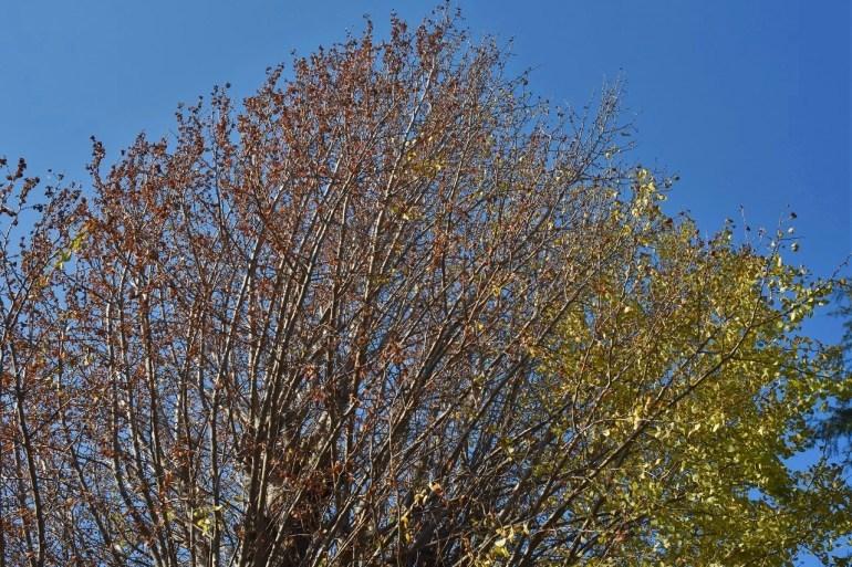 小さい秋をさがして。_d0065116_23442147.jpg