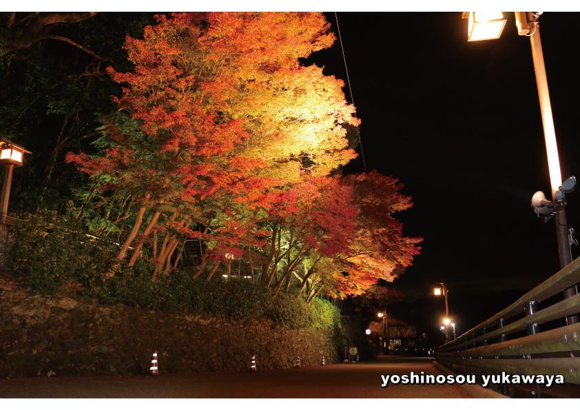吉野山 紅葉情報とライトアップ…綺麗になってきました!!_e0154524_19415125.jpg