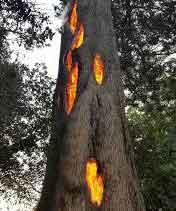 『カリフォルニアの山火事 車を溶かし、人を・・・』 / Business Insider_b0003330_01167.jpg