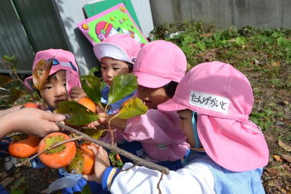 柿収穫と表彰式♪_e0125433_15073906.jpg