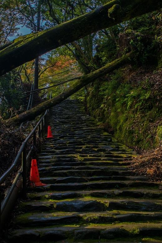 2018京都紅葉~神護寺_e0363038_14053203.jpg