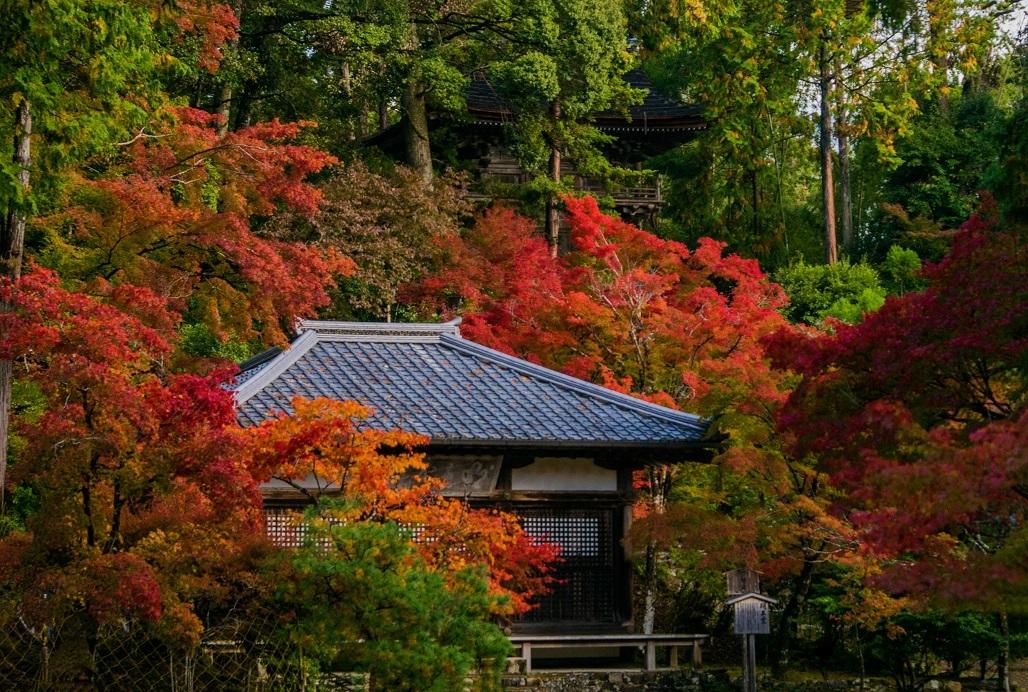 2018京都紅葉~神護寺_e0363038_14055380.jpg