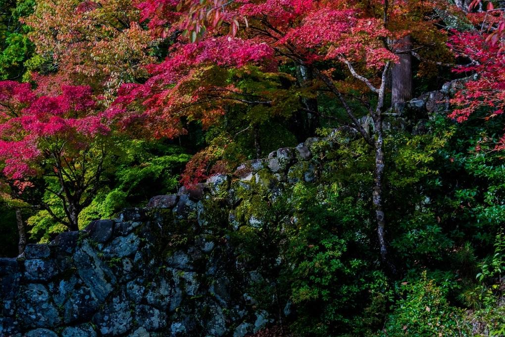 2018京都紅葉~神護寺_e0363038_14061360.jpg