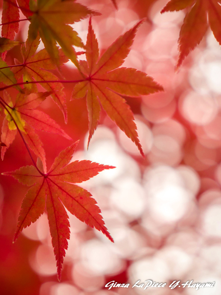 風景の写真 紅葉の季節_b0133053_03165668.jpg