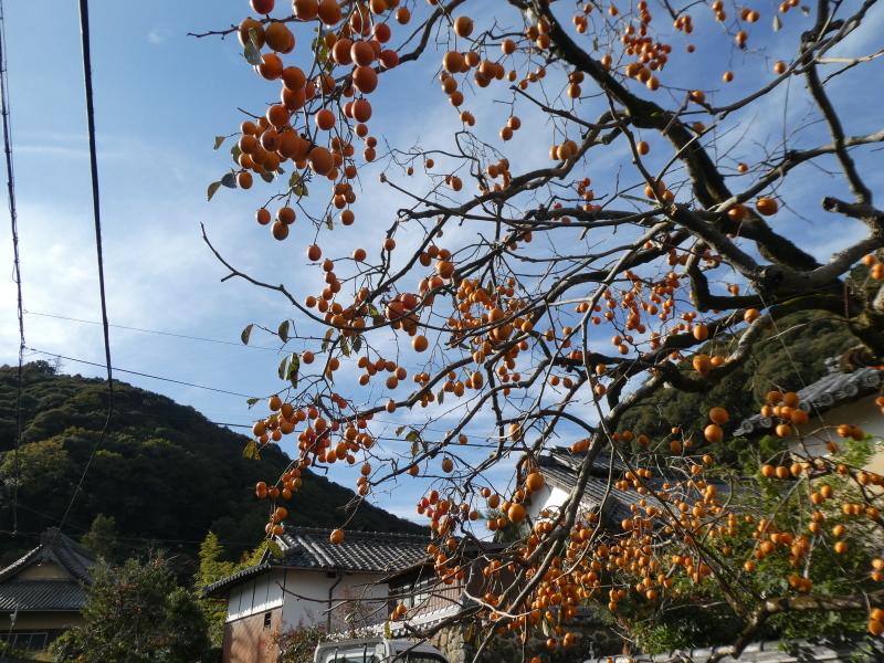 枯れ松大木の伐採・・・孝子の森_c0108460_21185568.jpg